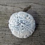 Versteinerter Seeigel Echinocorys
