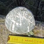 Schöner versteinerter Seeigel ( Echinocorys ? )
