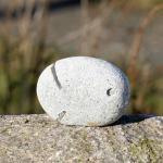 Hellgrauer Fisch aus einem Stein von der Rügener Küste