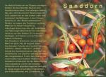 Postkarte Sanddorn