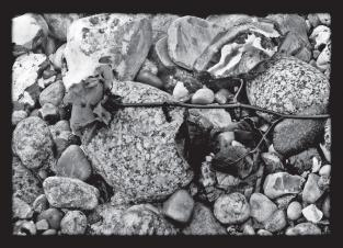 Postkarte Rose am Strand