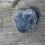 versteinerter Herzseeigel Cardiaster
