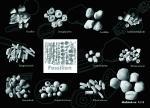 Postkarte Fossilien