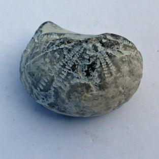 Versteinerter Seeigel