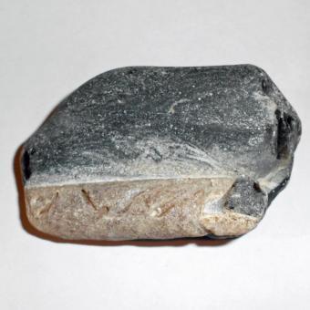 Belemnit auf einem Feuerstein